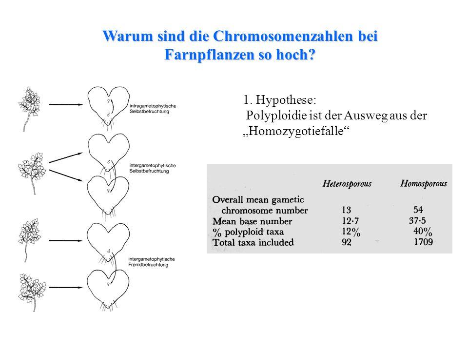 folioses Lebermoos 1. Hypothese: Polyploidie ist der Ausweg aus der Homozygotiefalle Warum sind die Chromosomenzahlen bei Farnpflanzen so hoch?