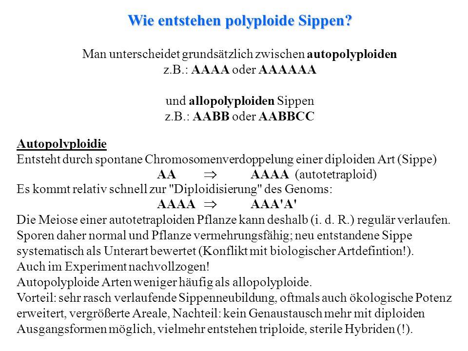 folioses Lebermoos Man unterscheidet grundsätzlich zwischen autopolyploiden z.B.: AAAA oder AAAAAA und allopolyploiden Sippen z.B.: AABB oder AABBCC W