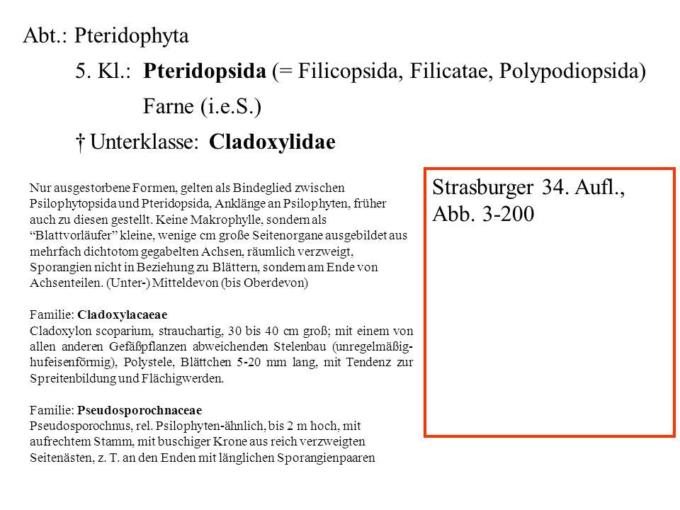 Abt.: Pteridophyta 5. Kl.: Pteridopsida (= Filicopsida, Filicatae, Polypodiopsida) Farne (i.e.S.) Unterklasse: Cladoxylidae folioses Lebermoos Nur aus