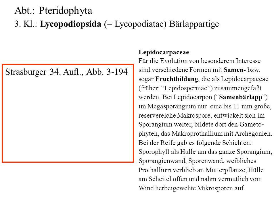 Abt.: Pteridophyta 3. Kl.: Lycopodiopsida (= Lycopodiatae) Bärlappartige folioses Lebermoos Lepidocarpaceae Für die Evolution von besonderem Interesse