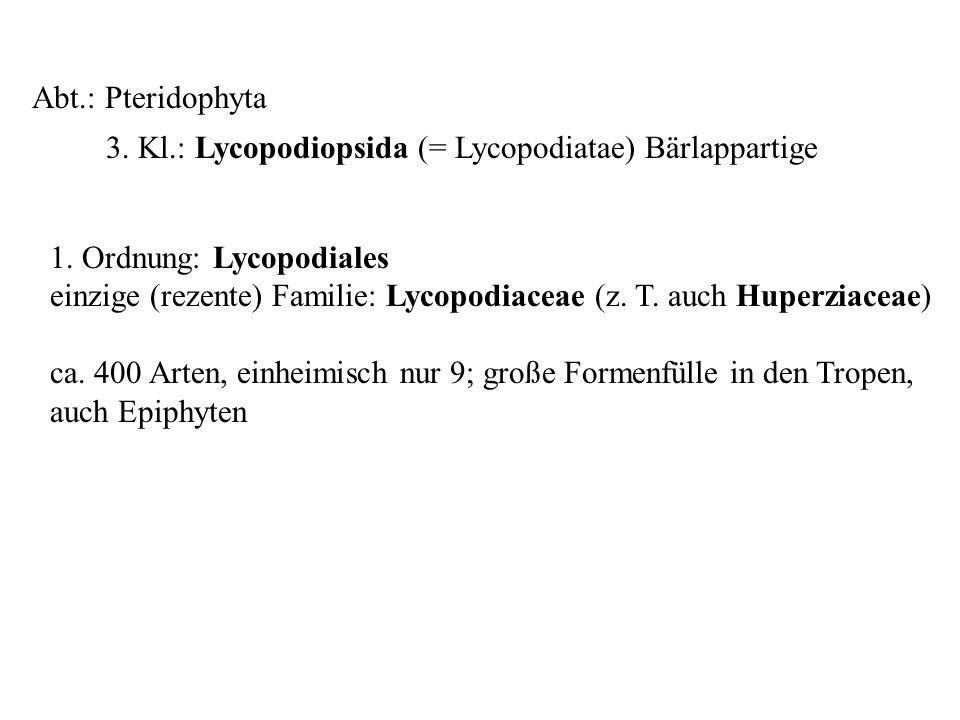 Abt.: Pteridophyta 3. Kl.: Lycopodiopsida (= Lycopodiatae) Bärlappartige folioses Lebermoos 1. Ordnung: Lycopodiales einzige (rezente) Familie: Lycopo