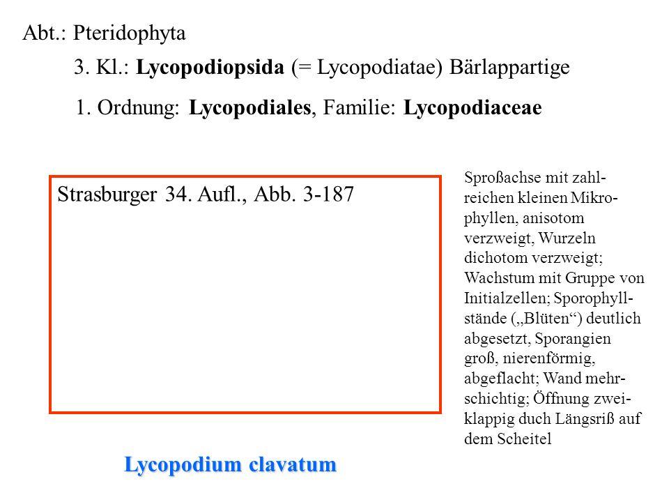 Abt.: Pteridophyta 3. Kl.: Lycopodiopsida (= Lycopodiatae) Bärlappartige folioses Lebermoos 1. Ordnung: Lycopodiales, Familie: Lycopodiaceae Lycopodiu