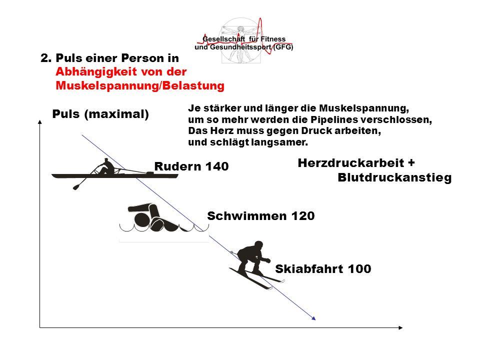 2. Puls einer Person in Abhängigkeit von der Muskelspannung/Belastung Puls (maximal) Rudern 140 Schwimmen 120 Skiabfahrt 100 Je stärker und länger die
