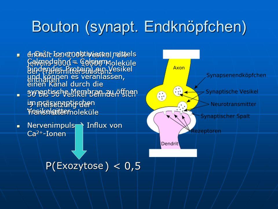 Bouton (synapt. Endknöpfchen) enthält ca. 2000 Vesikel, die jeweils 5000 – 10000 Moleküle der Transmittersubstanz enthalten enthält ca. 2000 Vesikel,