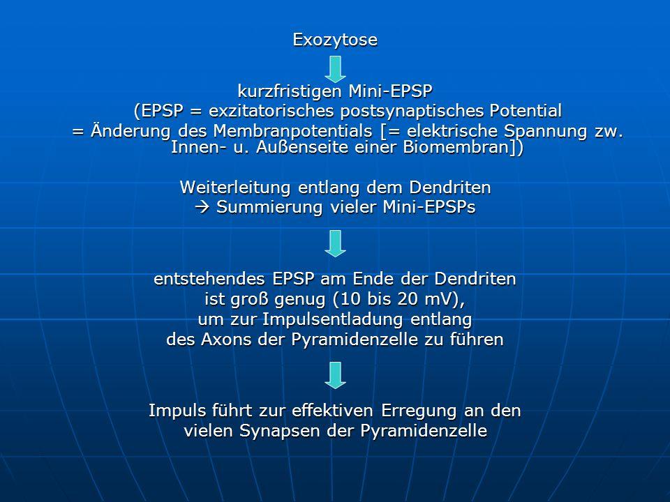 Exozytose kurzfristigen Mini-EPSP (EPSP = exzitatorisches postsynaptisches Potential = Änderung des Membranpotentials [= elektrische Spannung zw. Inne
