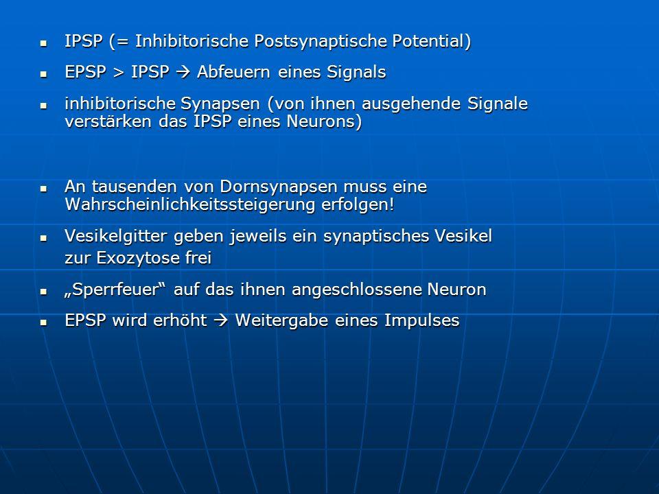IPSP (= Inhibitorische Postsynaptische Potential) IPSP (= Inhibitorische Postsynaptische Potential) EPSP > IPSP Abfeuern eines Signals EPSP > IPSP Abf