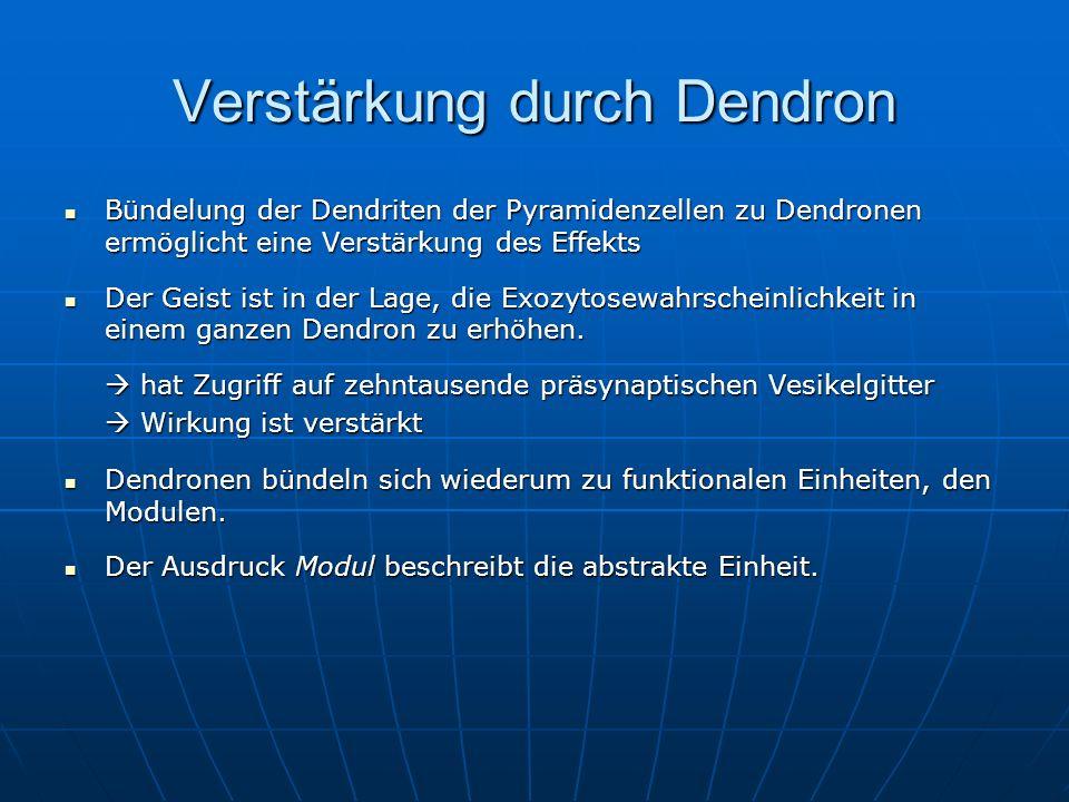 Verstärkung durch Dendron Bündelung der Dendriten der Pyramidenzellen zu Dendronen ermöglicht eine Verstärkung des Effekts Bündelung der Dendriten der