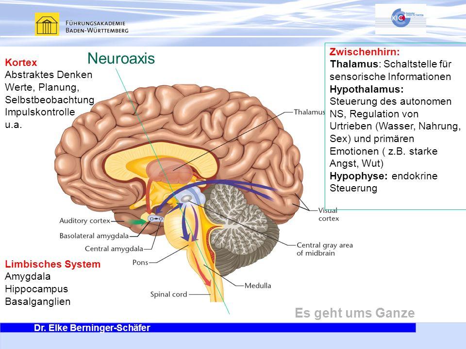 Dr. Elke Berninger-Schäfer Es geht ums Ganze Neuroaxis Kortex Abstraktes Denken Werte, Planung, Selbstbeobachtung Impulskontrolle u.a. Zwischenhirn: T