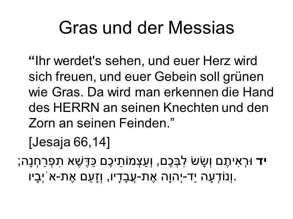 Gras und der Messias Ihr werdet's sehen, und euer Herz wird sich freuen, und euer Gebein soll grünen wie Gras. Da wird man erkennen die Hand des HERRN