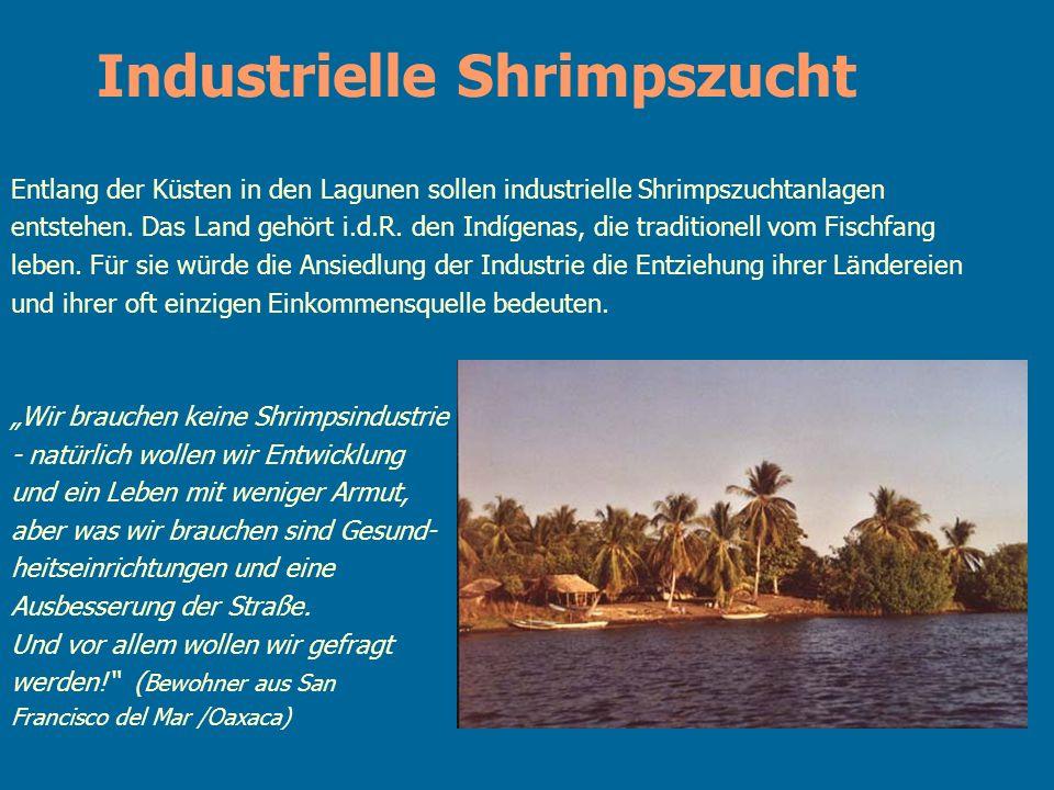 Entlang der Küsten in den Lagunen sollen industrielle Shrimpszuchtanlagen entstehen. Das Land gehört i.d.R. den Indígenas, die traditionell vom Fischf