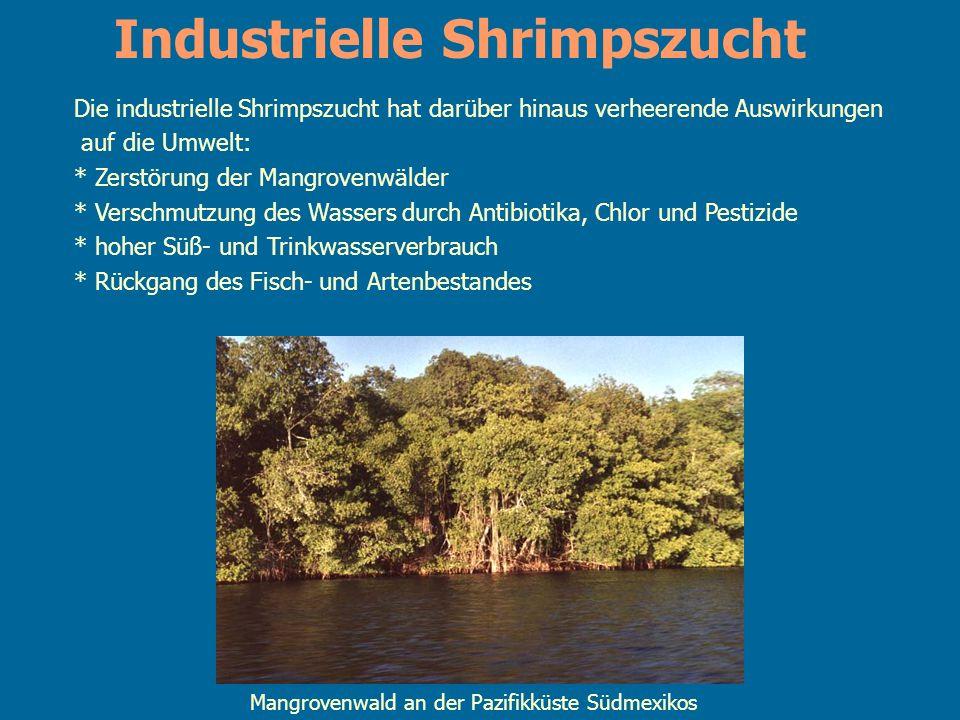 Die industrielle Shrimpszucht hat darüber hinaus verheerende Auswirkungen auf die Umwelt: * Zerstörung der Mangrovenwälder * Verschmutzung des Wassers