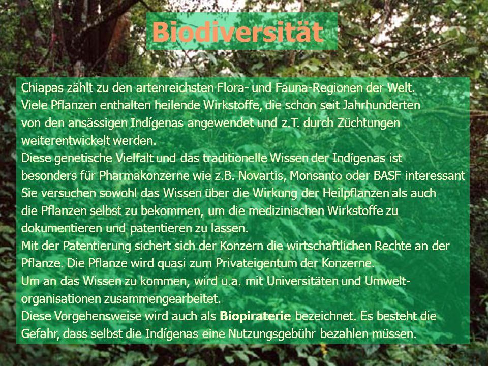 Biodiversität Chiapas zählt zu den artenreichsten Flora- und Fauna-Regionen der Welt. Viele Pflanzen enthalten heilende Wirkstoffe, die schon seit Jah