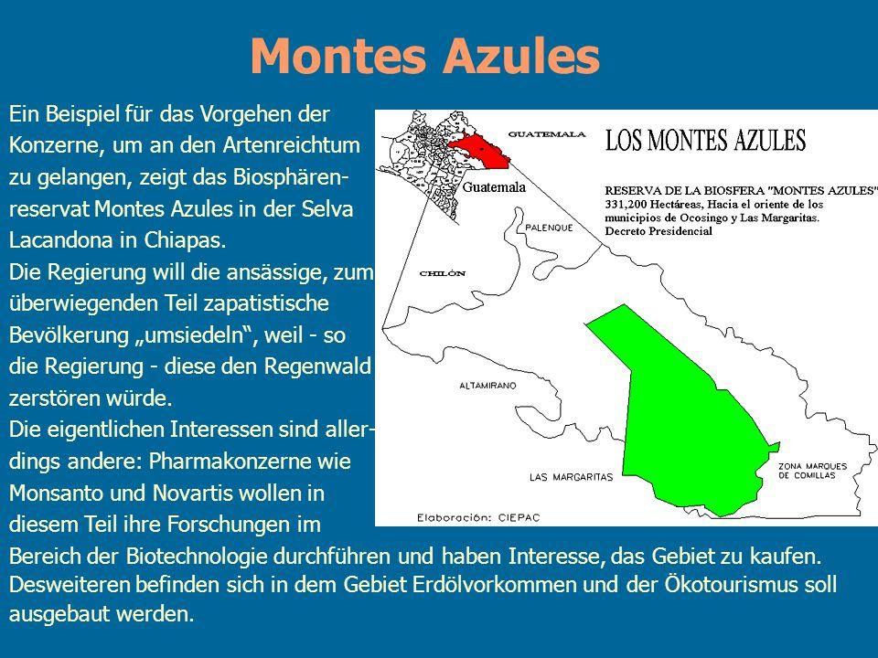 Montes Azules Ein Beispiel für das Vorgehen der Konzerne, um an den Artenreichtum zu gelangen, zeigt das Biosphären- reservat Montes Azules in der Sel