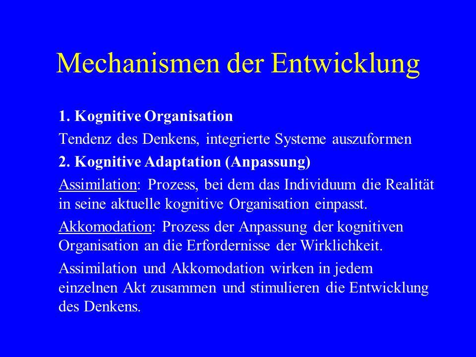 Mechanismen der Entwicklung 1. Kognitive Organisation Tendenz des Denkens, integrierte Systeme auszuformen 2. Kognitive Adaptation (Anpassung) Assimil