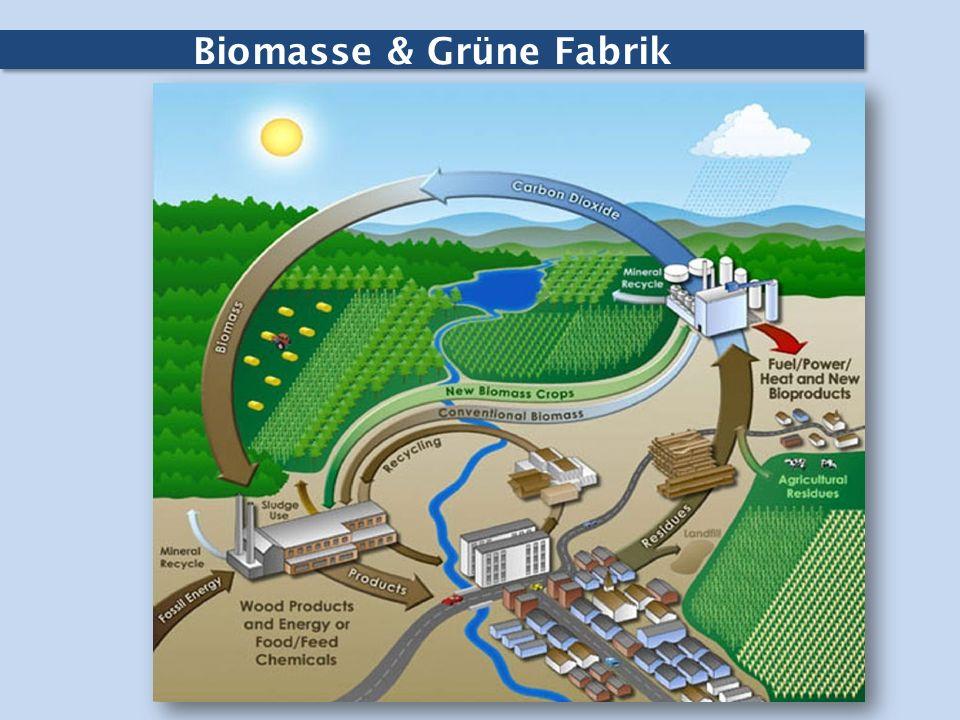 Biomasse & Grüne Fabrik