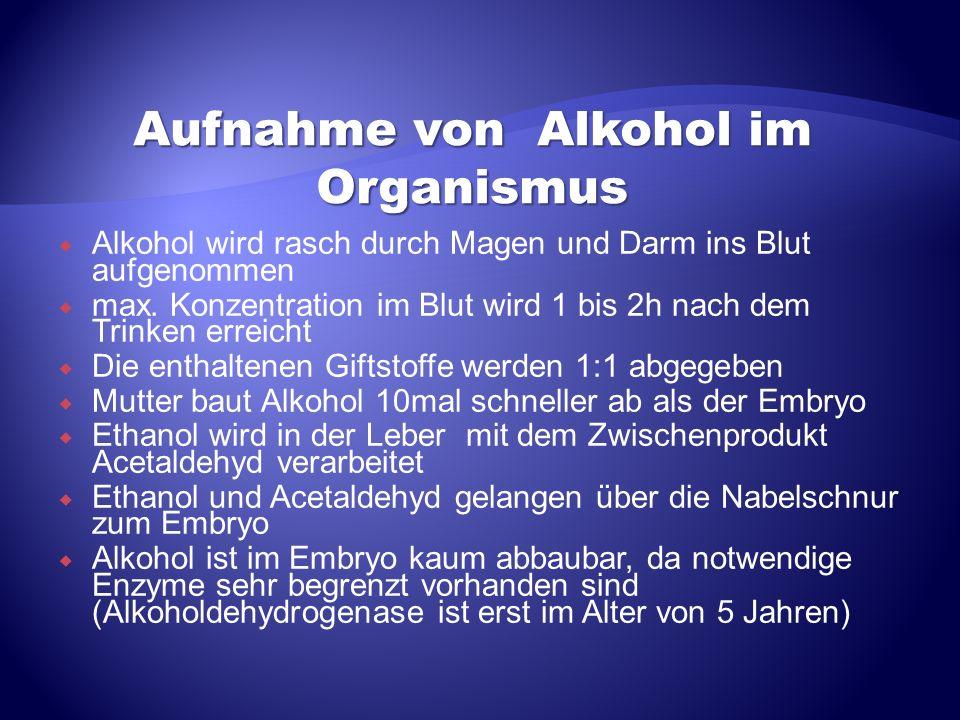 Alkohol wird rasch durch Magen und Darm ins Blut aufgenommen max. Konzentration im Blut wird 1 bis 2h nach dem Trinken erreicht Die enthaltenen Giftst