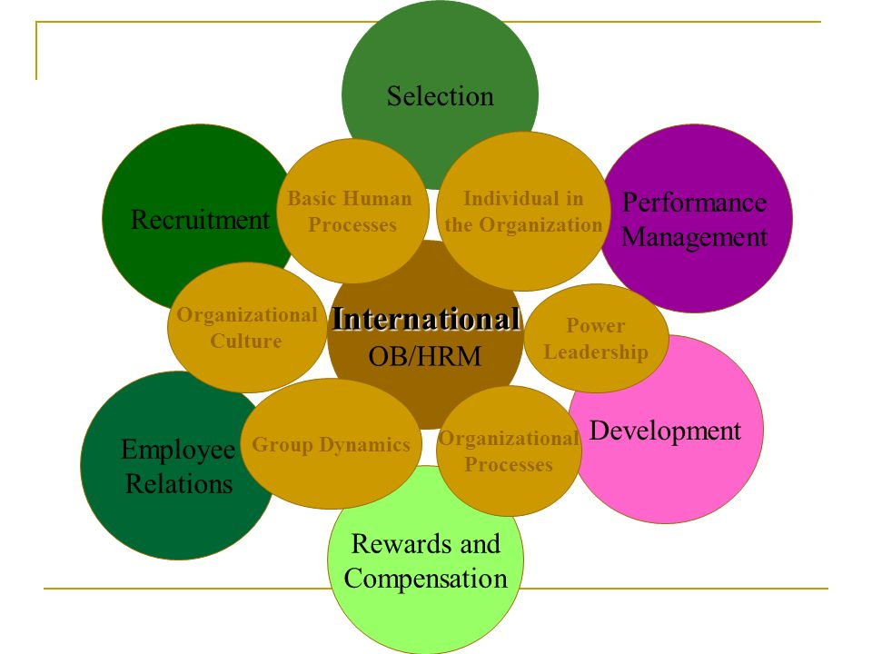 Performance Management Domestic OB/HRM Rewards and Compensation Development Employee Relations Selection Recruitment Basic Human Processes Individual