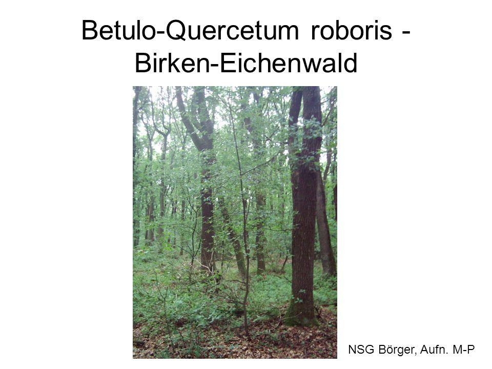 Betulo-Quercetum roboris - Birken-Eichenwald NSG Börger, Aufn. M-P