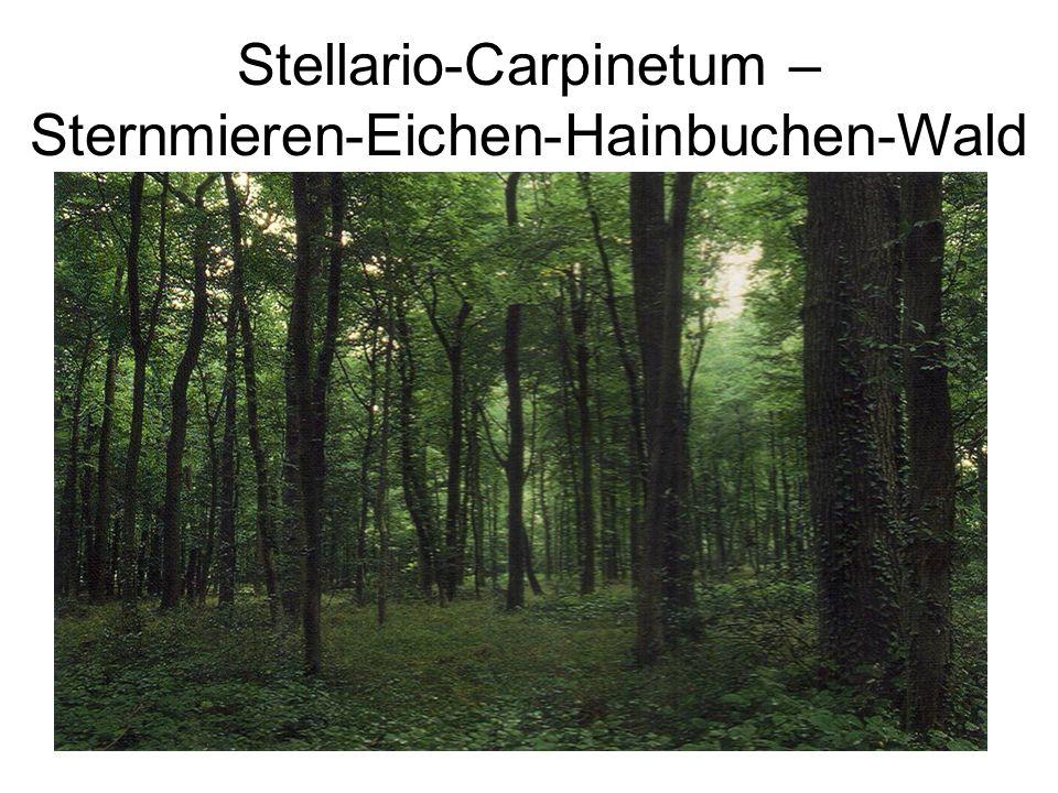 Klasse:Quercetea robori-petraeae; Birken-Eichenwälder Ordnung:Quercetalia robori-petraeae Verband:Quercion robori-petraeae Ass.:Betulo-Quercetum roboris; Birken-Eichenwald Arten LMNOPStetigkeit AD,VD,ODFrangula alnus +R+3/5 ADJuniperus communis RR2/5 AD,VD,ODLonicera periclymenum 1R2/5 VC,OCTrientalis europaea +1134/5 Melampyrum pratense 11/5 VD,ODQuercus petraea 55454/5 Molinia caerulea R1/5 Quercus robur 21/5 KDSorbus aucuparia R+1++5/5 Dryopteris carthusiana 11+24/5 Vaccinium myrtillus 33444/5 KCAvenella flexuosa 5R1+15/5 Maianthemum bifolium 1+214/5 BegleiterCorydalis claviculata 1R+1R5/5 Prunus serotina 1222R5/5 Dryopteris dilatata (und x carthusiana) R+R3/5 Dryopteris carthusiana x dilatata 11/5 Pinus sylvestris 41/5