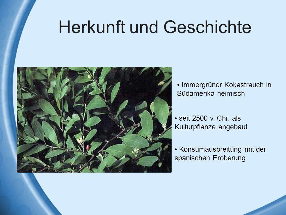 Herkunft und Geschichte Immergrüner Kokastrauch in Südamerika heimisch seit 2500 v. Chr. als Kulturpflanze angebaut Konsumausbreitung mit der spanisch