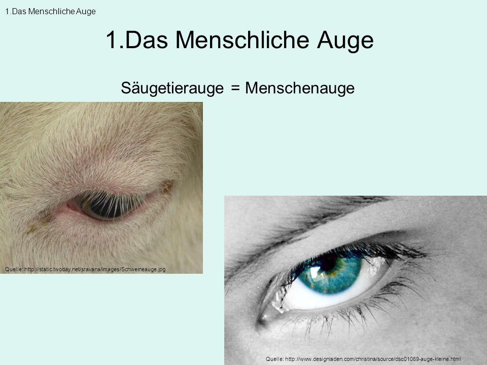 1.Das Menschliche Auge Säugetierauge = Menschenauge 1.Das Menschliche Auge Quelle: http://static.twoday.net/sravana/images/Schweineauge.jpg Quelle: ht