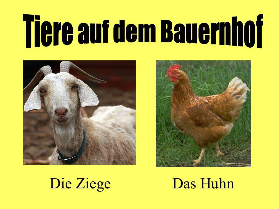 Die ZiegeDas Huhn