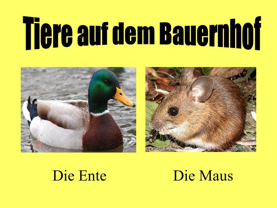 Die EnteDie Maus