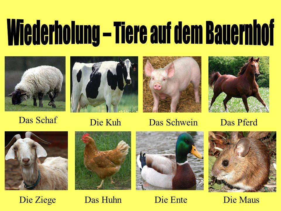 Das Schaf Die KuhDas SchweinDas Pferd Die ZiegeDas HuhnDie EnteDie Maus
