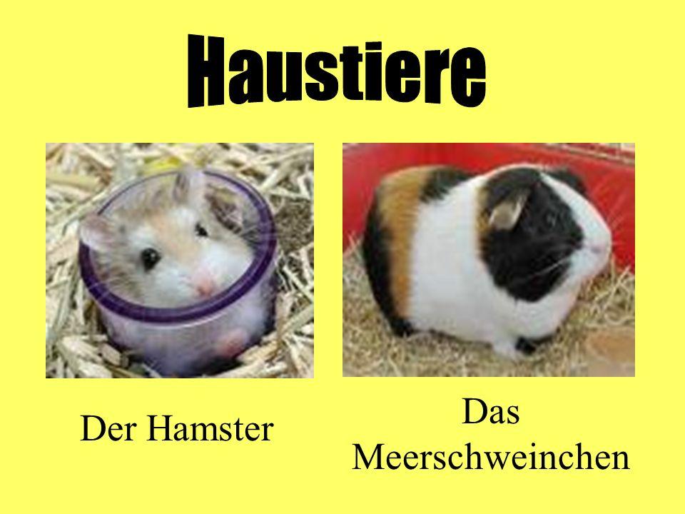 Der Hamster Das Meerschweinchen