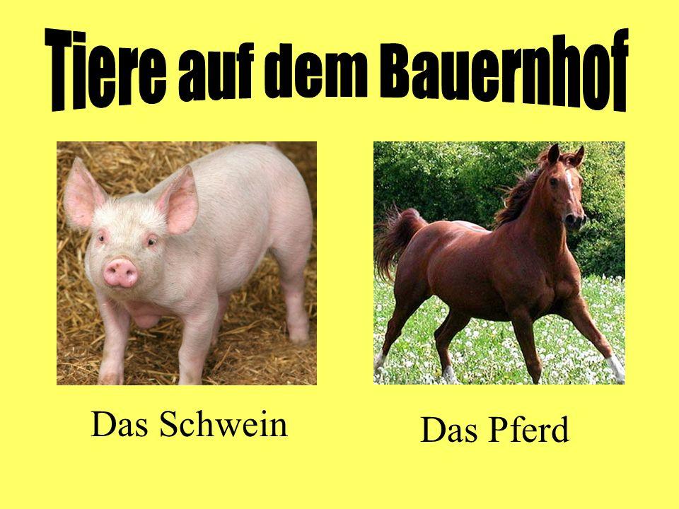 Das Schwein Das Pferd