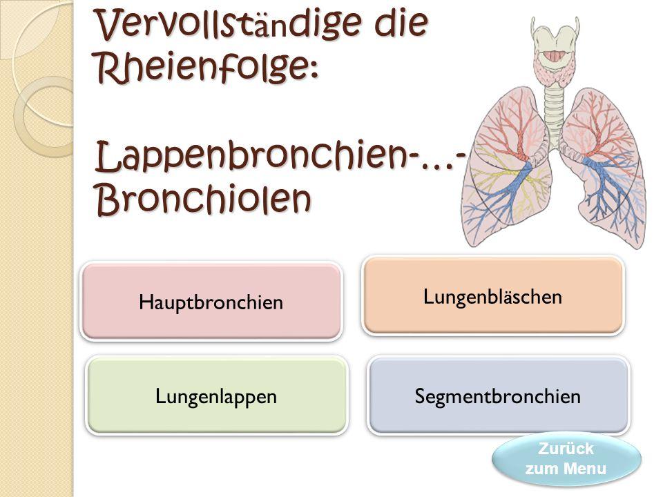 Das Atmungssystem bei der S ä ugetiere besteht aus den …. und den Lungen. Rachen Atemwege Luftr ö hre Luftr ö hre Nasenh ö hle Nasenh ö hle Zurück zum
