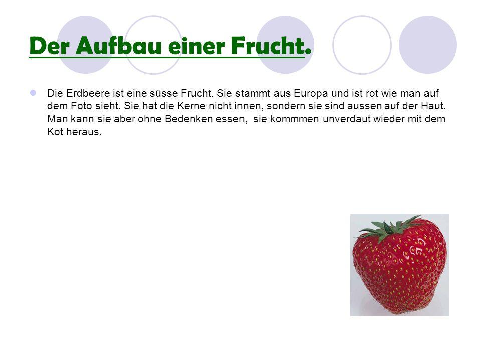 Wie viele Erdbeersorten gibt es auf der Welt .Es gibt über 1000 Erdbeersorten.