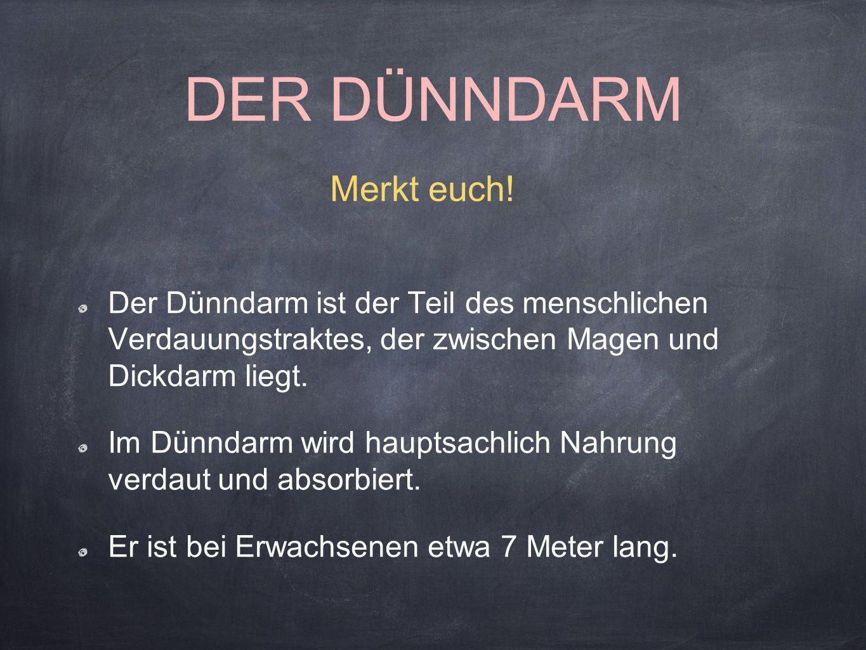 Der Dünndarm gliedert sich in 3 Teile Zwölffingerdarm (lat.