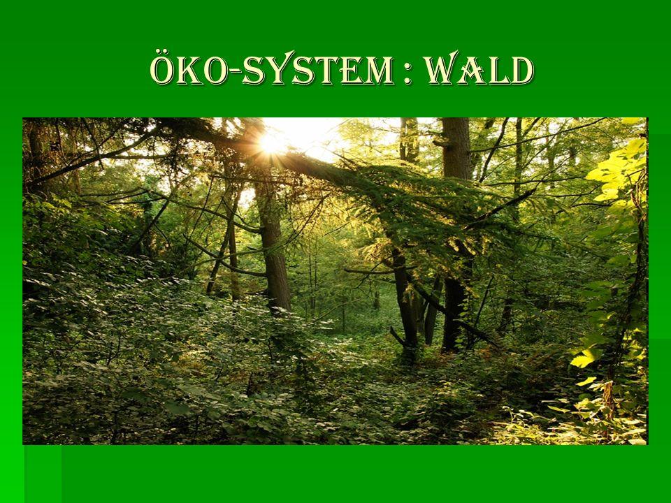öKO-SYSTEM : WALD öKO-SYSTEM : WALD