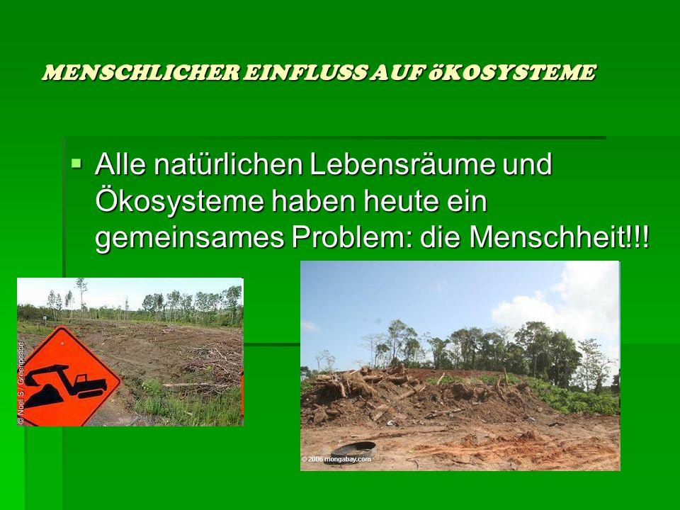 DAS öKOSYSTEM WALD DAS öKOSYSTEM WALD Der Wald ist ein funktionierendes System Der Wald ist ein funktionierendes System Unter allen Landnutzungsformen