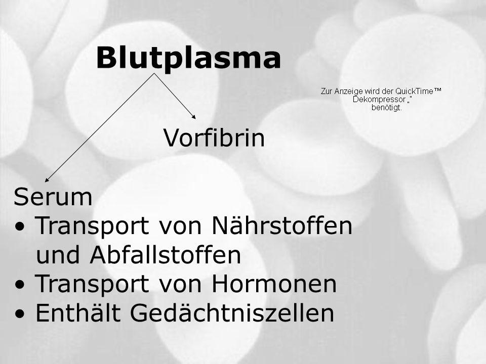Blutplasma Vorfibrin Serum Transport von Nährstoffen und Abfallstoffen Transport von Hormonen Enthält Gedächtniszellen