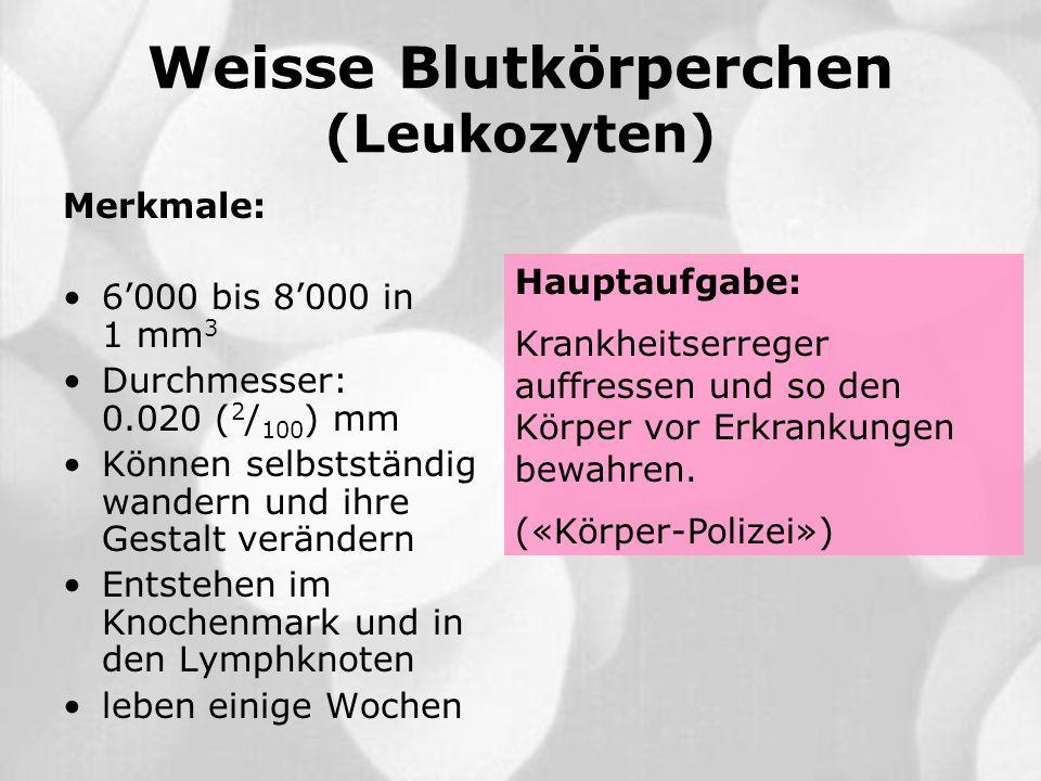 Weisse Blutkörperchen (Leukozyten) Merkmale: 6000 bis 8000 in 1 mm 3 Durchmesser: 0.020 ( 2 / 100 ) mm Können selbstständig wandern und ihre Gestalt v