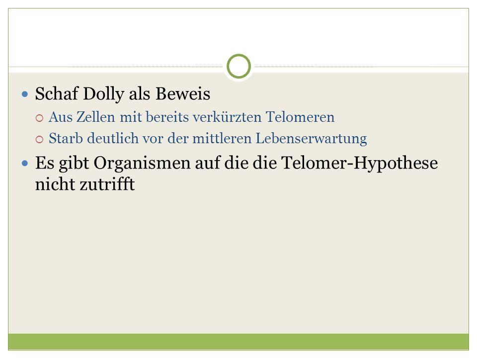 Schaf Dolly als Beweis Aus Zellen mit bereits verkürzten Telomeren Starb deutlich vor der mittleren Lebenserwartung Es gibt Organismen auf die die Tel