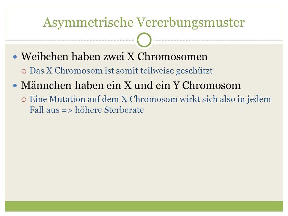 Asymmetrische Vererbungsmuster Weibchen haben zwei X Chromosomen Das X Chromosom ist somit teilweise geschützt Männchen haben ein X und ein Y Chromoso