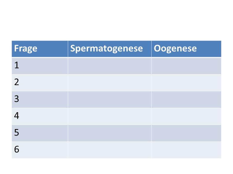 FrageSpermatogeneseOogenese 1 2 3 4 5 6
