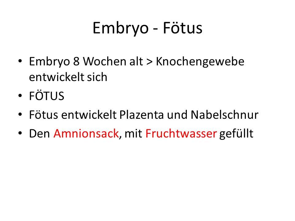 Embryo - Fötus Embryo 8 Wochen alt > Knochengewebe entwickelt sich FÖTUS Fötus entwickelt Plazenta und Nabelschnur Den Amnionsack, mit Fruchtwasser ge