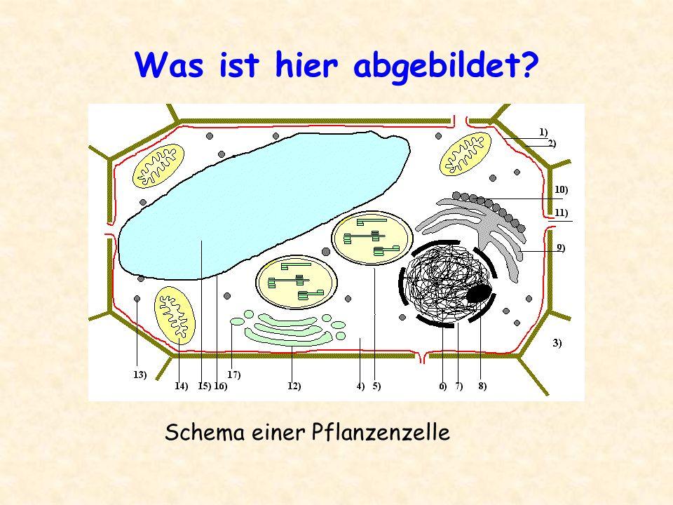 Was ist hier abgebildet? Schema einer Pflanzenzelle