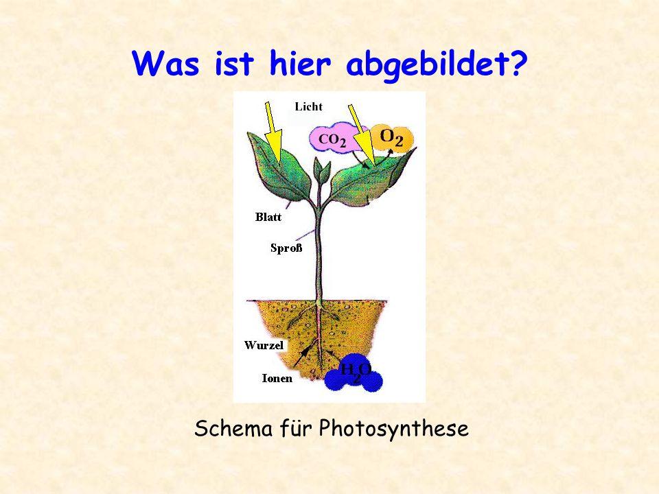 Was ist hier abgebildet? Schema für Photosynthese