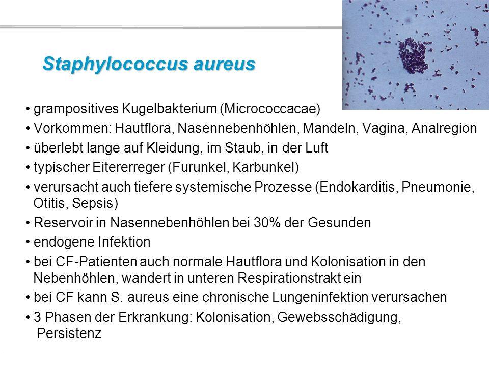 Staphylococcus aureus grampositives Kugelbakterium (Micrococcacae) Vorkommen: Hautflora, Nasennebenhöhlen, Mandeln, Vagina, Analregion überlebt lange