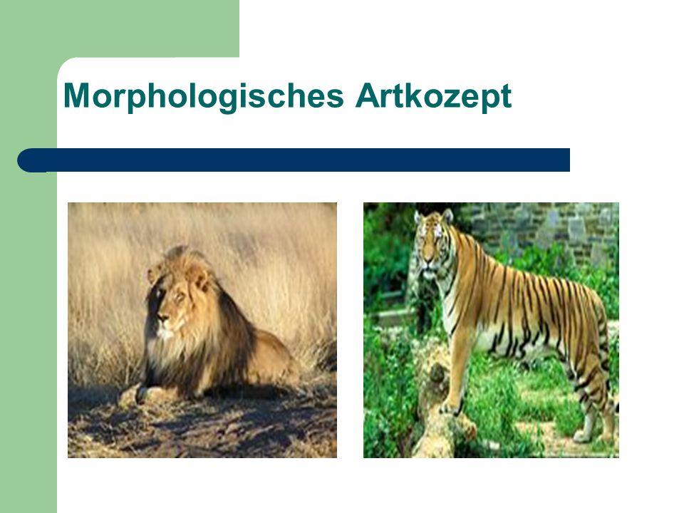 Morphologisches Artkozept