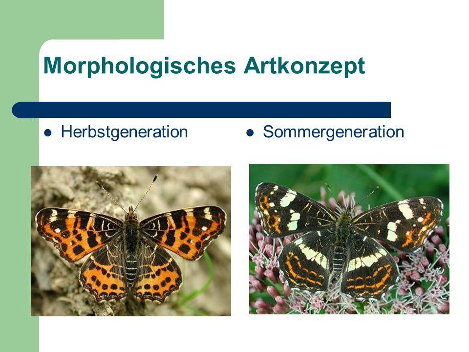 Morphologisches Artkonzept Herbstgeneration Sommergeneration