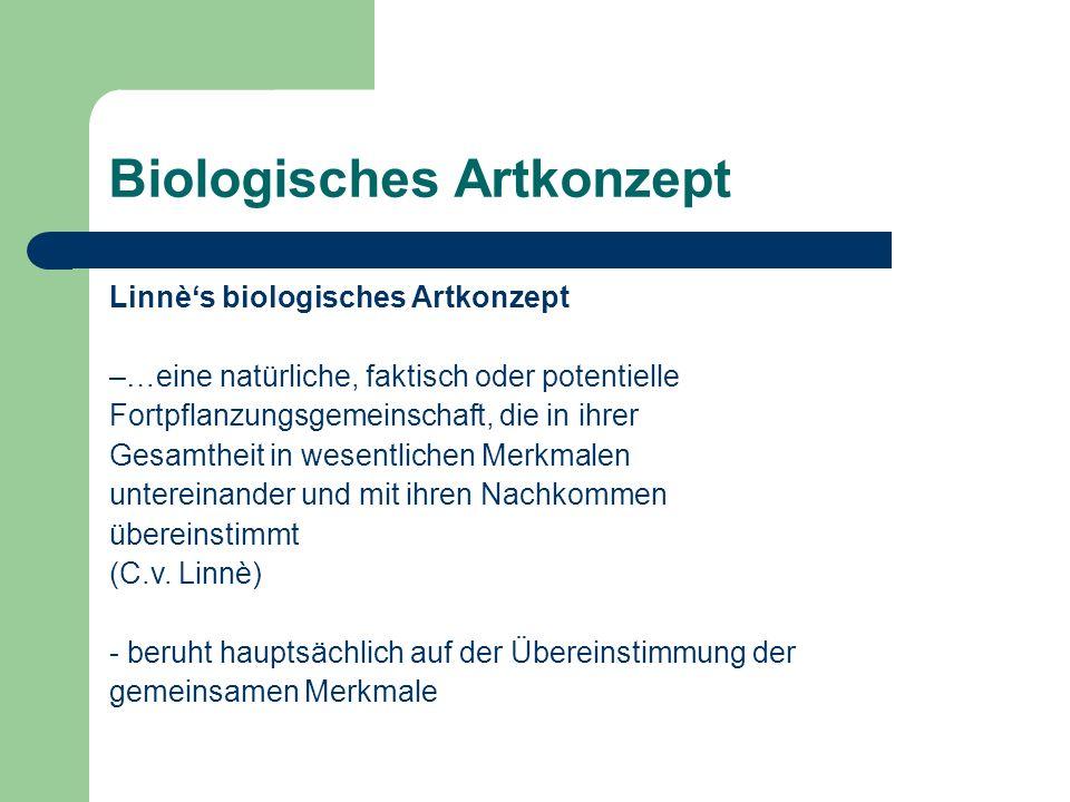 Biologisches Artkonzept Linnès biologisches Artkonzept –…eine natürliche, faktisch oder potentielle Fortpflanzungsgemeinschaft, die in ihrer Gesamthei