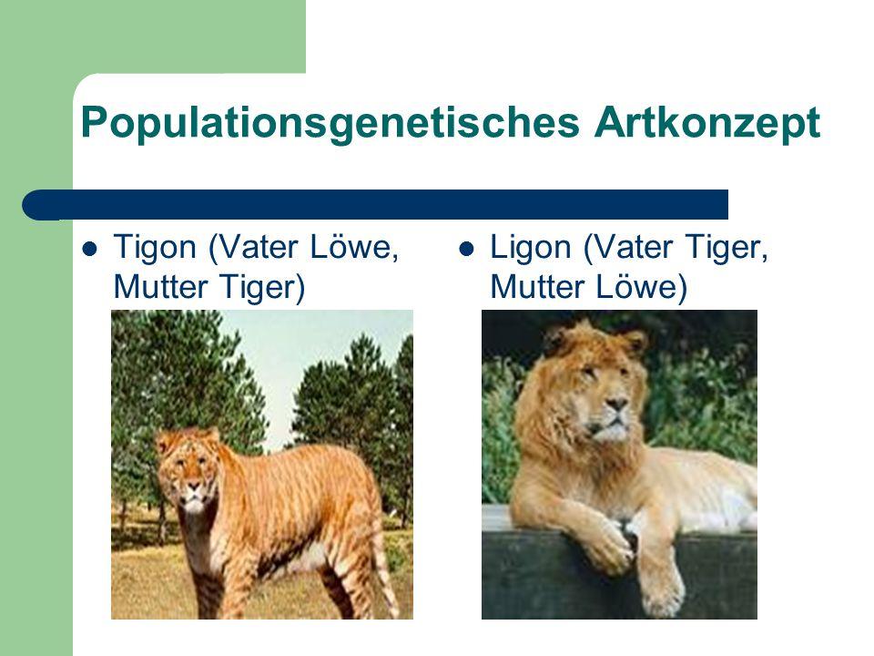 Populationsgenetisches Artkonzept Tigon (Vater Löwe, Mutter Tiger) Ligon (Vater Tiger, Mutter Löwe)