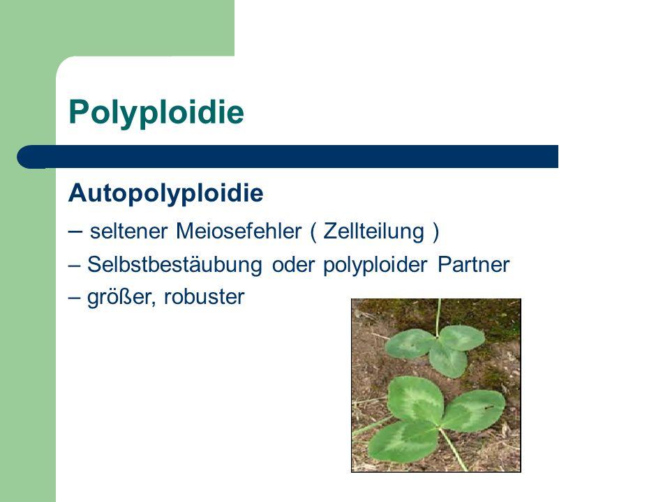 Polyploidie Autopolyploidie – seltener Meiosefehler ( Zellteilung ) – Selbstbestäubung oder polyploider Partner – größer, robuster