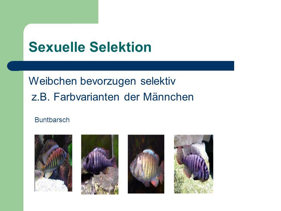 Sexuelle Selektion Weibchen bevorzugen selektiv z.B. Farbvarianten der Männchen Buntbarsch